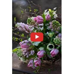 Lavendeldyrkning - Videokursus